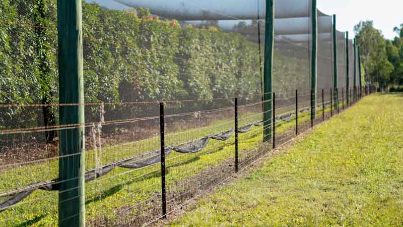 Image showing timber fruit netting supports
